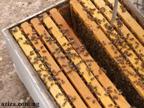 Bee farm and honey production in Nigeria