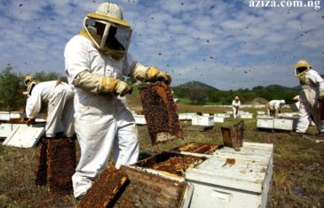 BEEKEEPING FARM TRAINING IN NIGERIA
