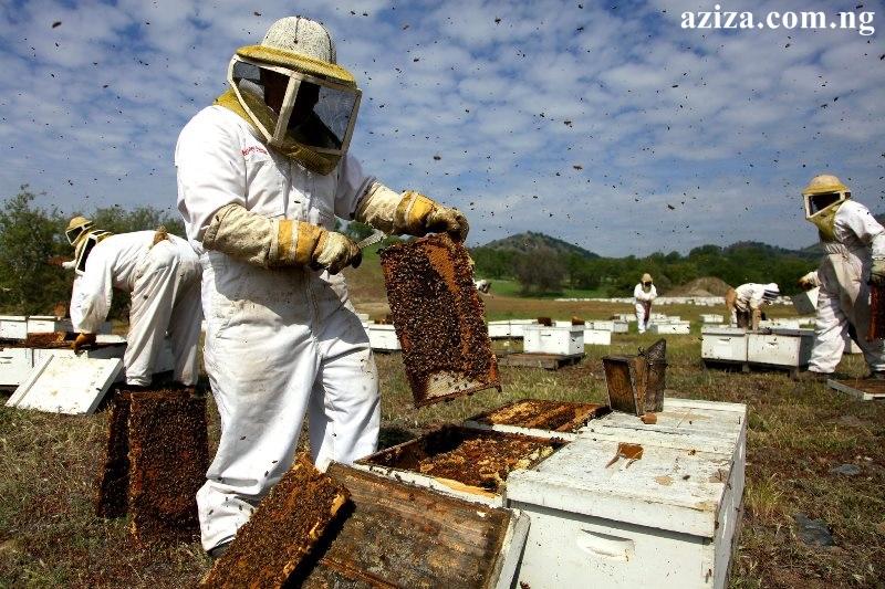 Beekeeping Farm Training