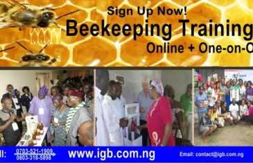 Beekeeping training in Nigeria