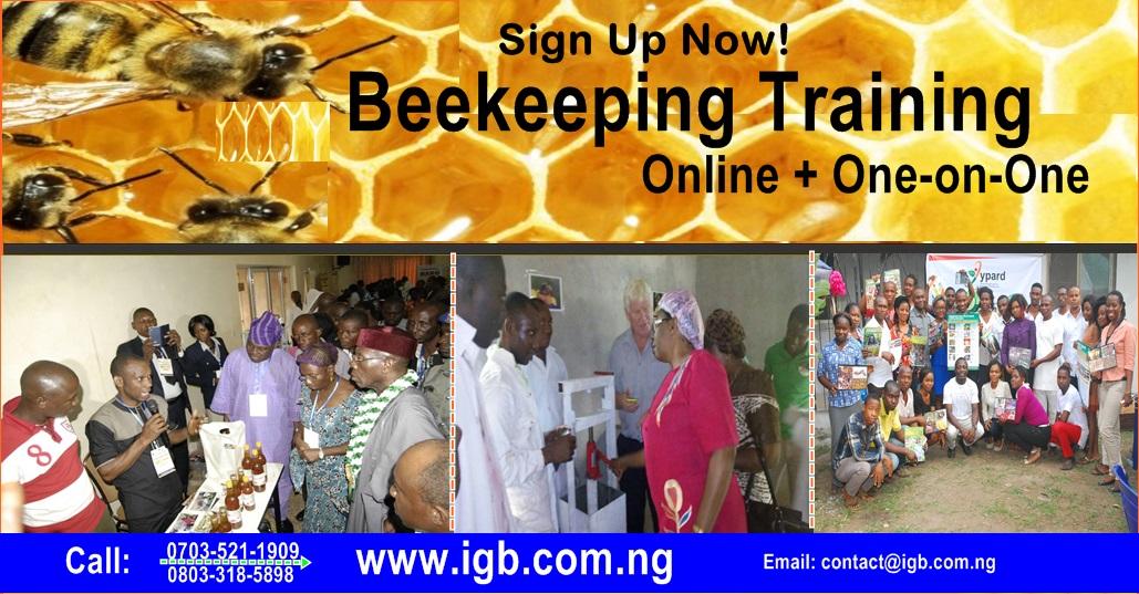 ONLINE BEEKEEPING TRAINING IN NIGERIA